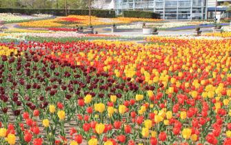 花畑・ふるさと庭園・グリーンハウス